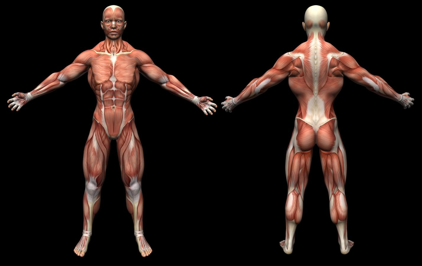 usg mięśni